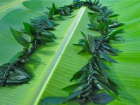 Double La`i (Ti Leaf)