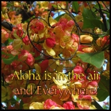 Aloha Is Everywhere