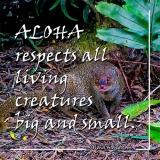 Aloha Respects